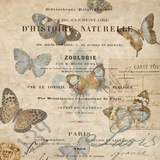 Papillon II Affiches par Deborah Devellier