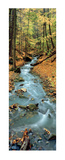 Autumn at Tiffany Creek, Hamilton, Ontario Posters by Dermot O'Kane