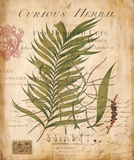 Etude de palmier I Posters par Deborah Devellier