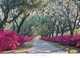 Azaleas, Bonaventure Posters by Winthrope Hiers