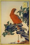 Parrot and Zuiko-Bush Prints by  Sugakudo