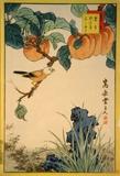 Hokicho-Bird, Apricot and Sekisho Grass Posters by  Sugakudo