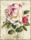 Garden View III Poster von Lisa Audit