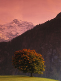 Switzerland, Alps Photographic Print by  Panoramic Images