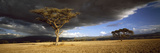 Tree W\Storm Clouds Tanzania Fotografisk tryk af Panoramic Images