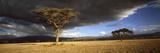 Tree W\Storm Clouds Tanzania Fotodruck von  Panoramic Images