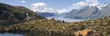 Horse Trekking Mt Cook New Zealand Photographic Print by  Panoramic Images
