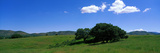 Meadow and Tree San Rafael Valley AZ Photographic Print by  Panoramic Images