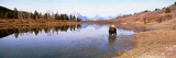 Bull Moose Grand Teton National Park WY USA Photographic Print by  Panoramic Images