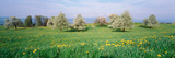 Peartrees Fields Aargau Switzerland Photographic Print by  Panoramic Images