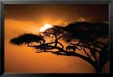 Afrikanischer Himmel Kunstdrucke