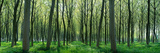Forest Trail Chateau-Thierry France Photographic Print by  Panoramic Images