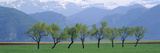 Trees in a Field with Mountain Range in the Background, Pyrenees, Spain Photographic Print by  Panoramic Images