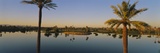 Palm Trees at the Lakeside, Phoenix, Maricopa County, Arizona, USA Photographic Print by  Panoramic Images