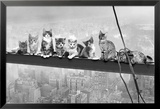 Cats On Girder- Print