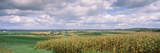 Corn and Alfalfa Fields, Green County, Wisconsin, USA Photographic Print by Panoramic Images