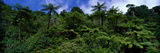 Rain Forest Paparoa National Park S Island New Zealand Photographic Print by  Panoramic Images