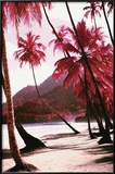 Red Palm Trees-Along Beach Prints