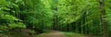 Road Through a Forest Near Kassel Germany Photographic Print by  Panoramic Images