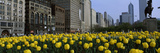 Tulip Flowers in a Park with Buildings in the Background, Grant Park, South Michigan Avenue, Chi... Photographic Print by  Panoramic Images