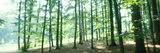 Forest Scene with Fog, Odenwald, Near Heidelberg, Germany Photographic Print by  Panoramic Images