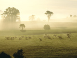 Farmland and Sheep Southland New Zealand Photographic Print by Panoramic Images