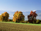 Switzerland, Swiss Midlands, Pear Orchard Photographic Print by  Panoramic Images
