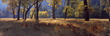 Oak Trees and Aspen Trees in a Forest, Yosemite National Park, California, USA Photographic Print by  Panoramic Images