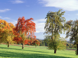 Switzerland, Pear Orchard , Autumn Photographic Print by  Panoramic Images