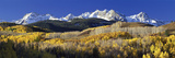 USA, Colorado, Rocky Mountains, Aspens, Autumn Photographic Print by  Panoramic Images