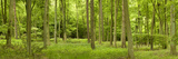 Spring in Thetford Forest, Norfolk, England Photographic Print by  Panoramic Images