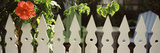 White Picket Fence and Red Hibiscus Flower Along Whitehead Street, Key West, Monroe County, Flor... Photographic Print by  Panoramic Images