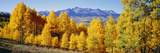 Fall Aspen Trees Telluride Co Photographic Print by  Panoramic Images