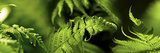 Fern Photographic Print by  Panoramic Images