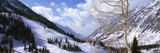 Trees in Snow, Snowbird Ski Resort, Utah, USA Photographic Print by  Panoramic Images