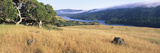 Grass with a Lake in the Background, Crystal Springs Reservoir, San Mateo County, California, USA Photographic Print by  Panoramic Images