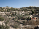 Trees on Mountains, Mount of Olives, Jerusalem, Israel Photographic Print by  Panoramic Images