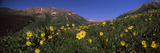 Wildflowers in a Forest, Kebler Pass, Crested Butte, Gunnison County, Colorado, USA Photographic Print by  Panoramic Images