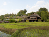 Rice Fields in Front of Villas, Four Seasons Resort, Chiang Mai, Chiang Mai Province, Thailand Photographic Print by  Panoramic Images
