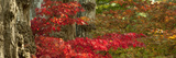 Trees and Plants in a Garden, Butchart Gardens, Victoria, Vancouver Island, British Columbia, Ca... Photographic Print by  Panoramic Images