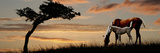 Horse Mare and a Foal Grazing by Tree at Sunset Photographic Print by  Panoramic Images