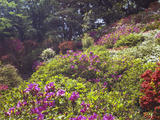 Trees and Plants in a Garden, Rikugien Garden, Tokyo Prefecture, Japan Photographic Print by  Panoramic Images