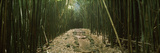 Bamboo Forest, Hana Coast, Maui, Hawaii, USA Photographic Print by  Panoramic Images