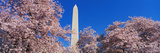 Cherry Blossoms Washington Monument Photographic Print by  Panoramic Images