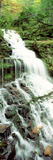 Ganoga Falls Ricketts Glenn State Park PA Photographic Print by  Panoramic Images