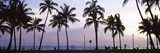 Palm Trees on the Beach, Waikiki, Honolulu, Oahu, Hawaii, USA Photographic Print by  Panoramic Images