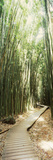 Trail in a Bamboo Forest, Hana Coast, Maui, Hawaii, USA Fotodruck von  Panoramic Images
