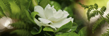 Fern with Magnolia Photographic Print by  Panoramic Images