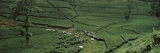 Tea Plantation, Java, Indonesia Photographic Print by  Panoramic Images