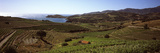 High Angle View of Vineyards on Coast, Port-Vendres, Pyrenees-Orientales, Languedoc-Roussillon, ... Photographic Print by  Panoramic Images